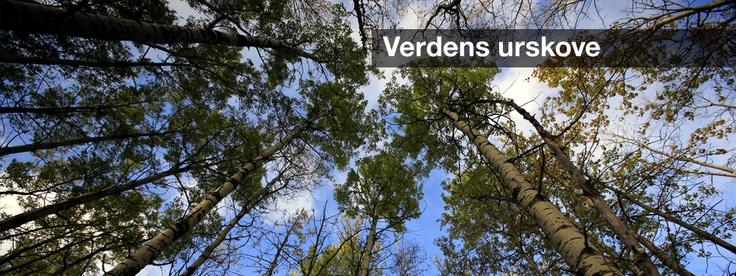 Verdens urskove | Greenpeace Danmark