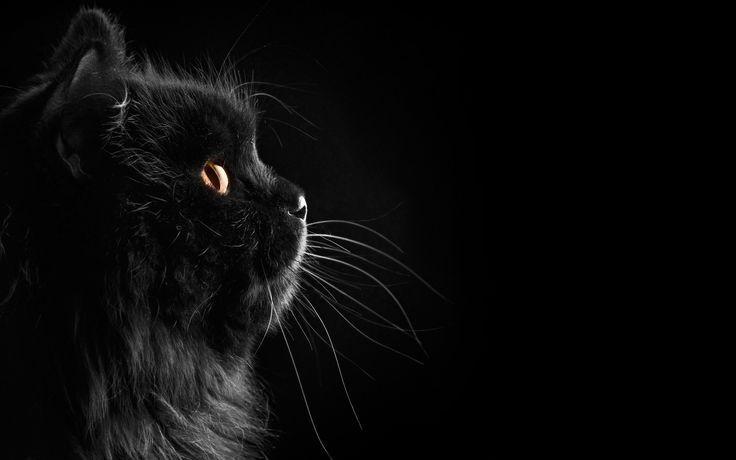 Black Cat Wallpaper Wallpaper Cats Blackcat Black Blackcat Cat Cats Halloweenwall Fluffy Black Cat Cats Cat Wallpaper