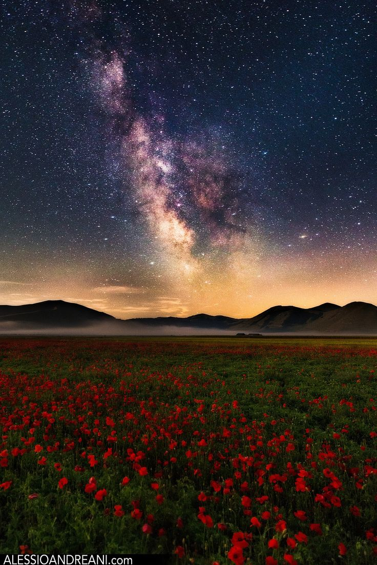 The flowering in Castelluccio di Norcia #Umbria is becoming more and more popular each year.