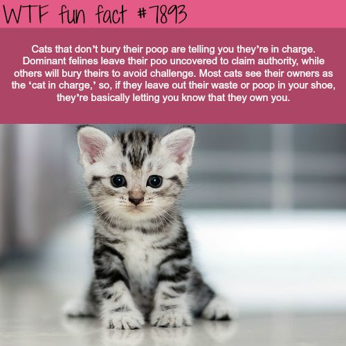 16 All New WTF Fun Facts About Animals