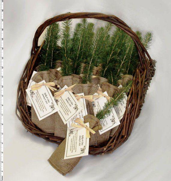 Pine Tree Sapling Wedding Favors!