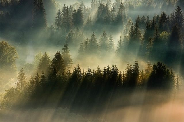 Forests Drenched in Light and Fog by Boguslaw Strempel | Colossal