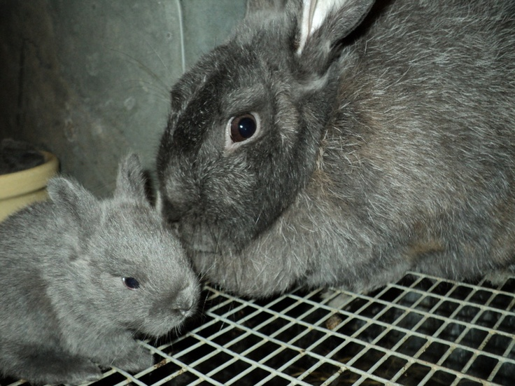 1000+ images about Bunnies on Pinterest | A bunny, Fur and ...