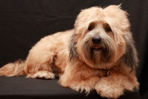 Are you looking for an overall pet care service from grooming to global relocation to pet accessories and foods?