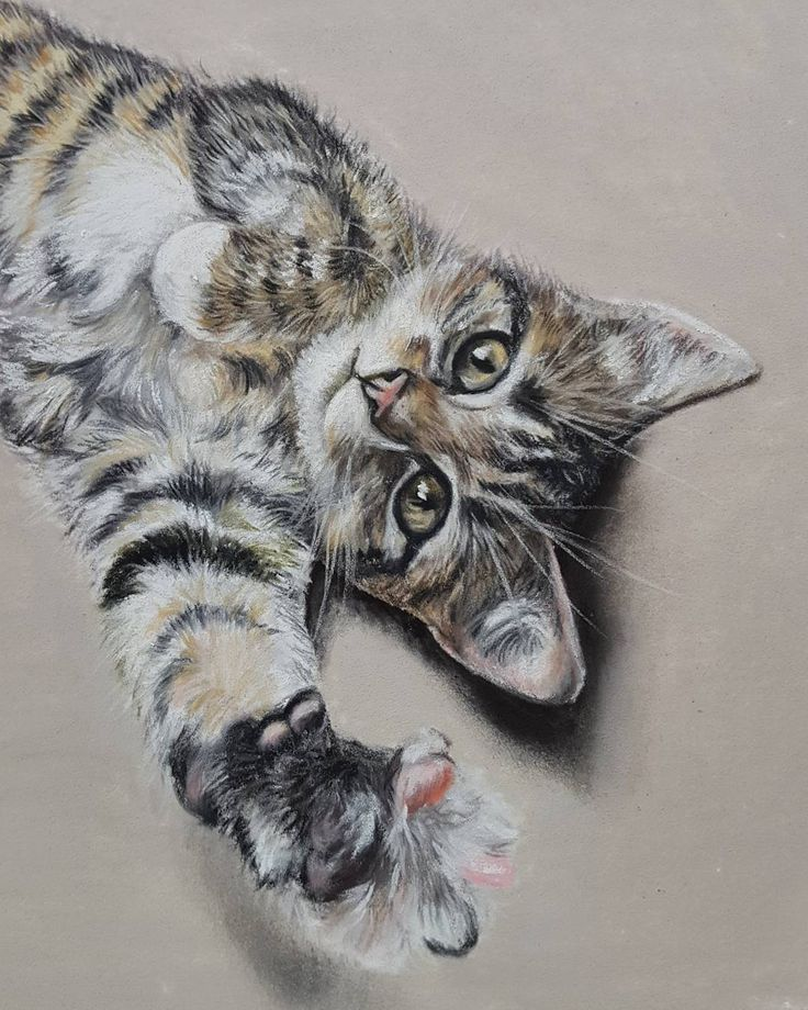 """Mi piace"": 47, commenti: 1 - Sarah King (@sarah_king_art) su Instagram: ""Cute kitty on soft pastel... keep those pets safe this bonfire night. #cat #kitten #kitty #art…"""