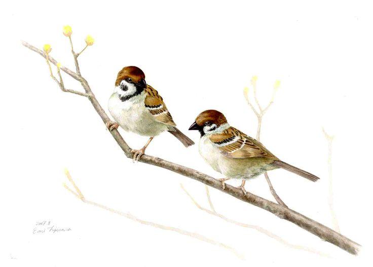 Tree Sparrows : Acrylic スズメつがい:アクリル絵具