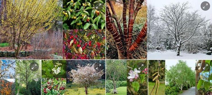 Her får du forslag til syv forskellige træer, som passer smukt til høje enfamiliehuse.