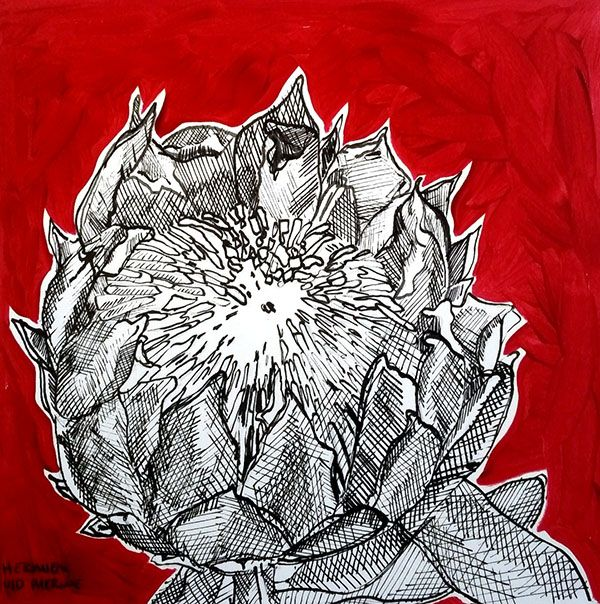 Title: Fynbos:  Table Mountain Fynbos 4 Medium: Pen-and-Ink drawing on paper with oil paint background Size: 200 x 200mm