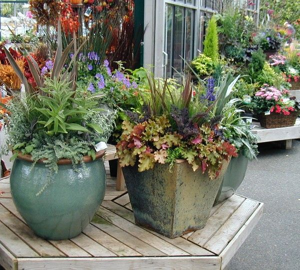 681 Best Images About G -Container Gardening On Pinterest | Container Plants Fall Containers ...
