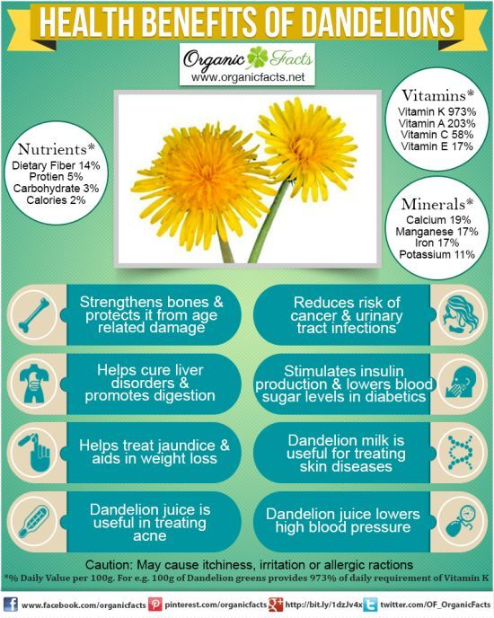 Health Benefits of Dandelions: The health benefits of dandelion include relief from liver disorders, diabetes, urinary disorders, acne, jaundice, cancer and anemia. It also helps in maintaining bone health, skin care and is a benefit to weight loss programs. These and other health benefits are currently being studied for complete validation by a number of international institutions.