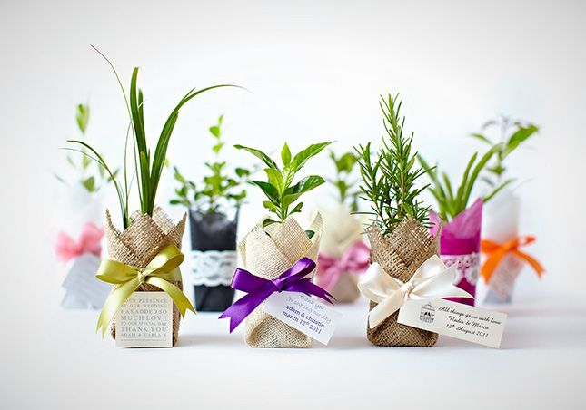 Your guests will love these bright plant favors.
