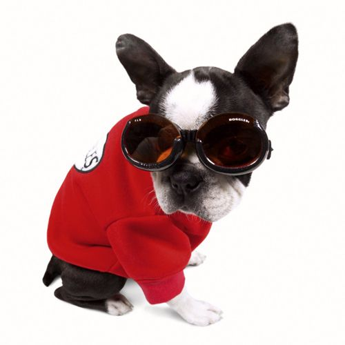 Here is a great selection of doogles, goggles for dogs to buy online. These sunglasses for dogs are goggles designed to fit the shape of a dog's head.