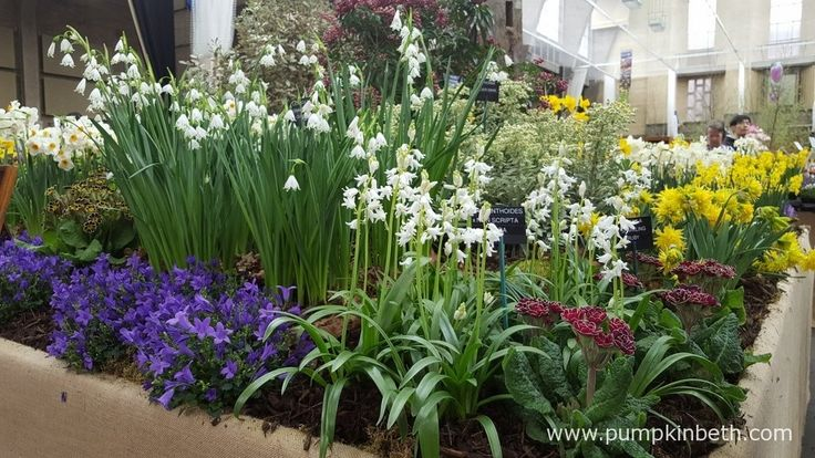 This beautiful exhibit from W & S Lockyer, specialist growers of auriculas, nerines, snowdrops, bulbs and perennials, was awarded a Gold Medal by the RHS Judges, at The RHS London Spring Plant Extravaganza 2016.