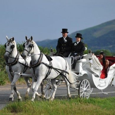 Fabulous Occasions White Wedding Horses and Carriages for your Fabulous Wedding Day