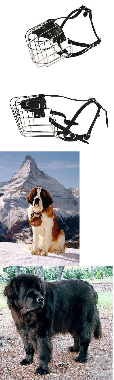 Muzzles 66784: Dean And Tyler Wire Basket Muzzle Size No. 12 - Saint Bernard New BUY IT NOW ONLY: $65.14