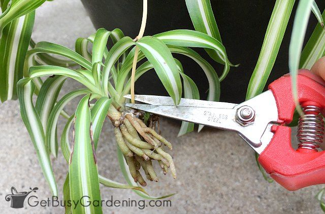 Easy Care House Plants