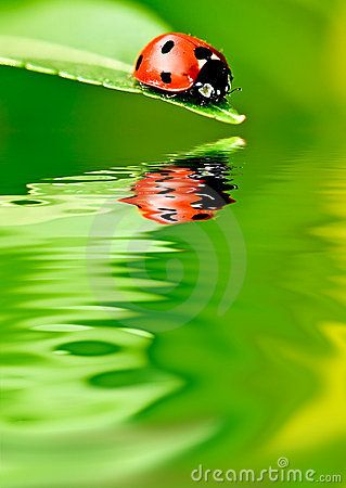 ladybug on cannabis - Google Search