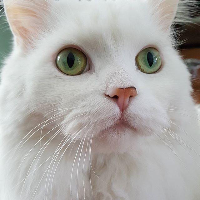 Mia. #cats #catsofinstagram