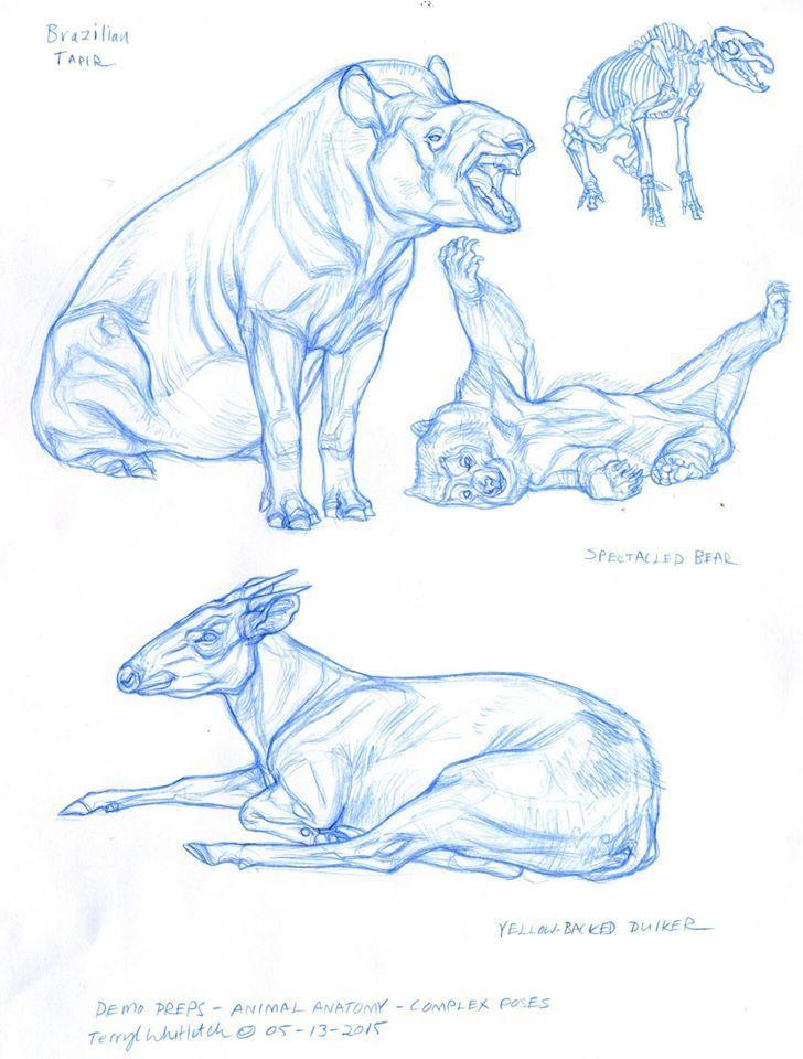 900 besten referencias de animales Bilder auf Pinterest ...