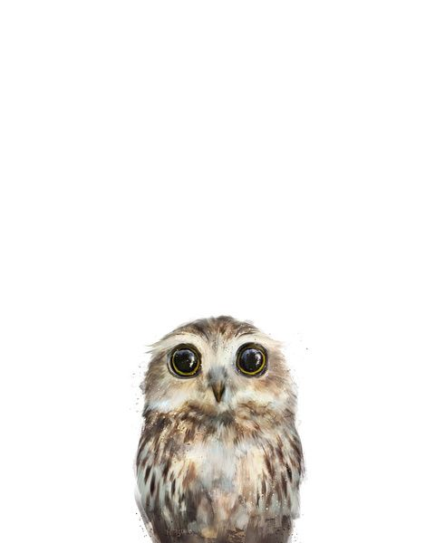 """Little Owl"" Giclee Art Print by 'Amy Hamilton' it's avail in several sizes and can be framed avail on 'Society6'♥❤♥"