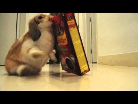 The Fight of the Century: Bunny vs. Box - February 24, 2013