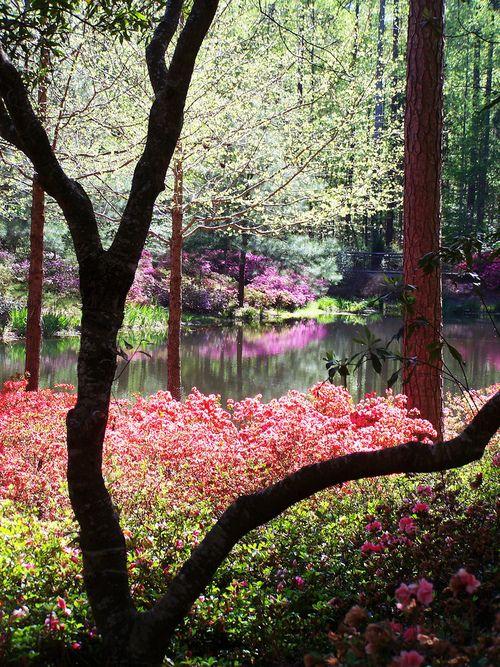 Callaway Gardens Georgia The Beauty Of Georgia Pinterest Gardens Beautiful And Pine