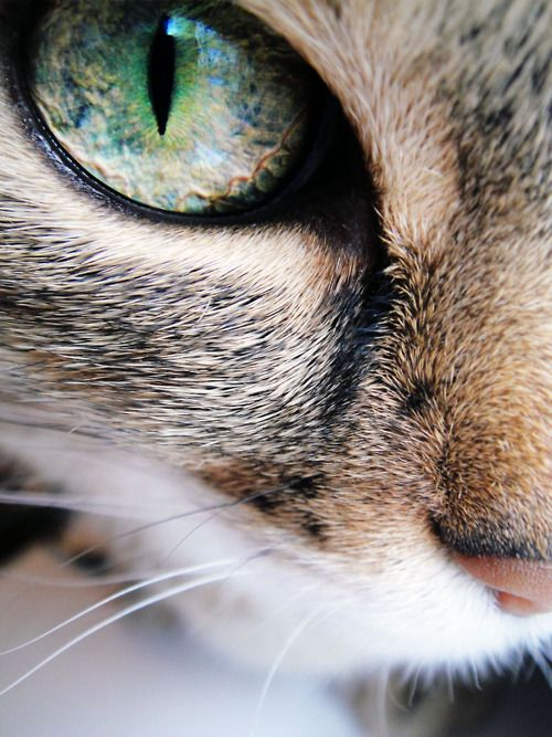 """When the green eyes of a cat look deep into you, you know that whatever it is…"