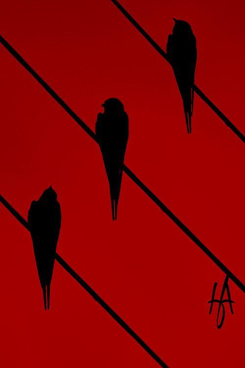 694 besten Colors: Red & Black Bilder auf Pinterest | Rouge ...