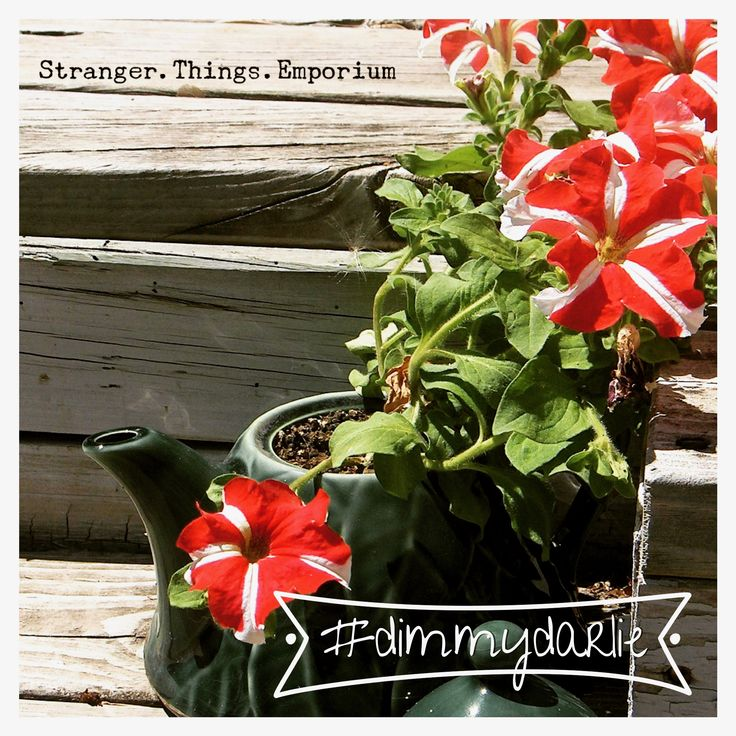Cute plants and colorful dreams! #dimmydarlie Follow us @stranger.things.emporium on Facebook & Instaagram for the latest news in store!