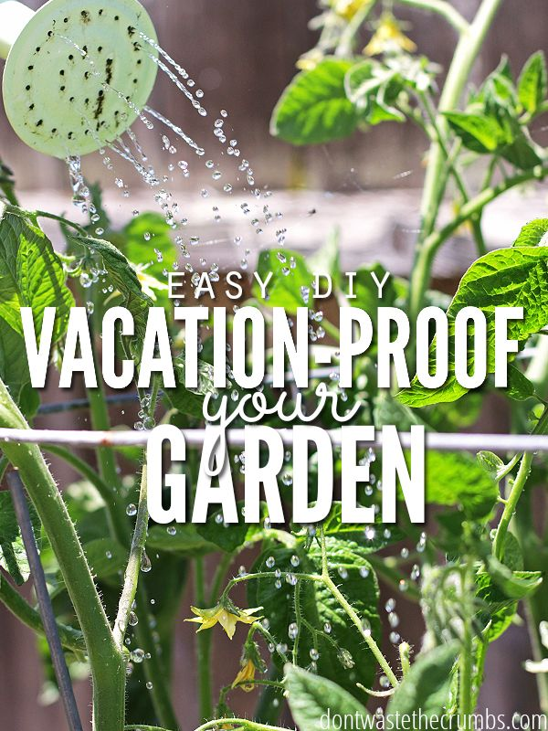 Great gardening tip! Super simple DIY hacks to set up before you leave for vacation to vacation proof your garden and ensure your plants don't die while you're gone! They take just a few minutes, and will make a world of a difference for your garden! :: DontWastetheCrumbs.com