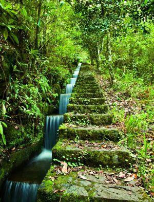 Levada Trails | Madeira