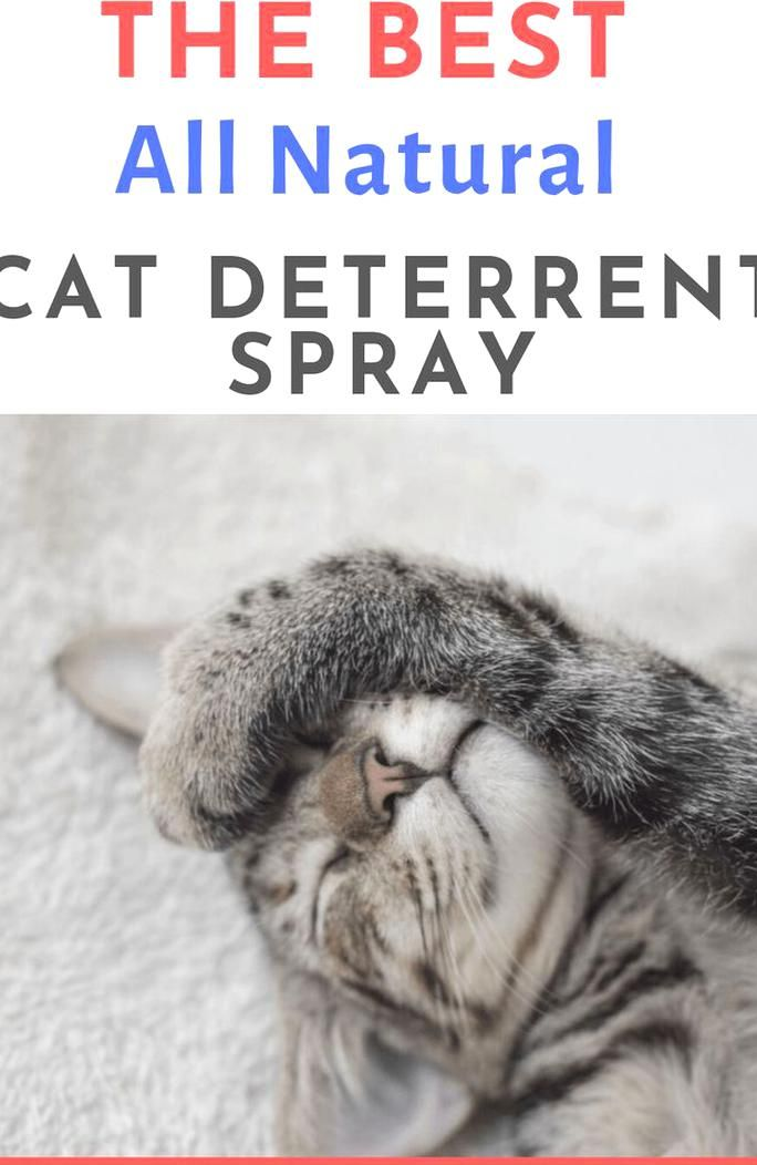 natural spray to stop cat scratching furniture