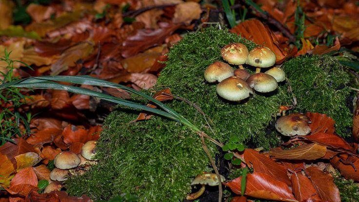 Pilze auf Moos