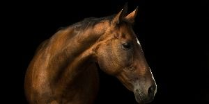 Dealing with Fear: Horse and Human Part II – Horse Collaborative  Annemarie New
