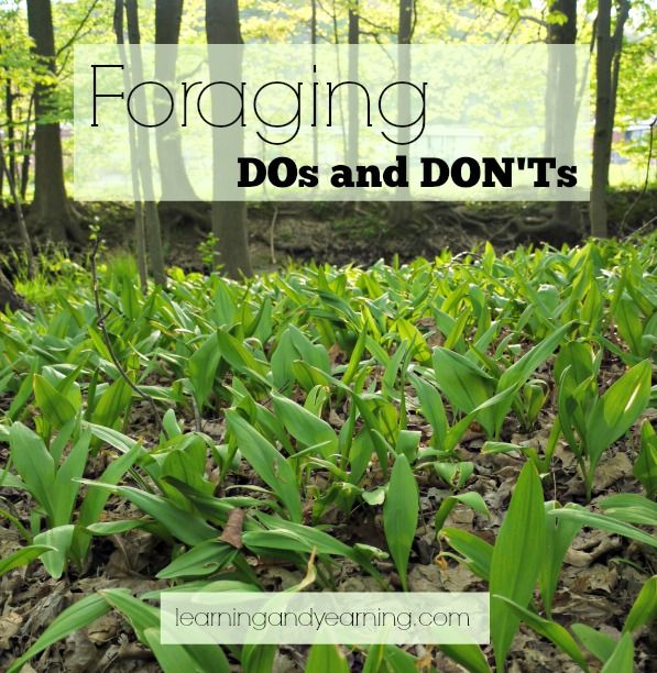 Foraging DOs and DON'Ts - how to safely find free food in the wild