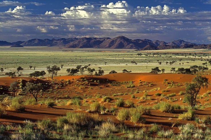 tok_tokkie_desert_namibia_africa.