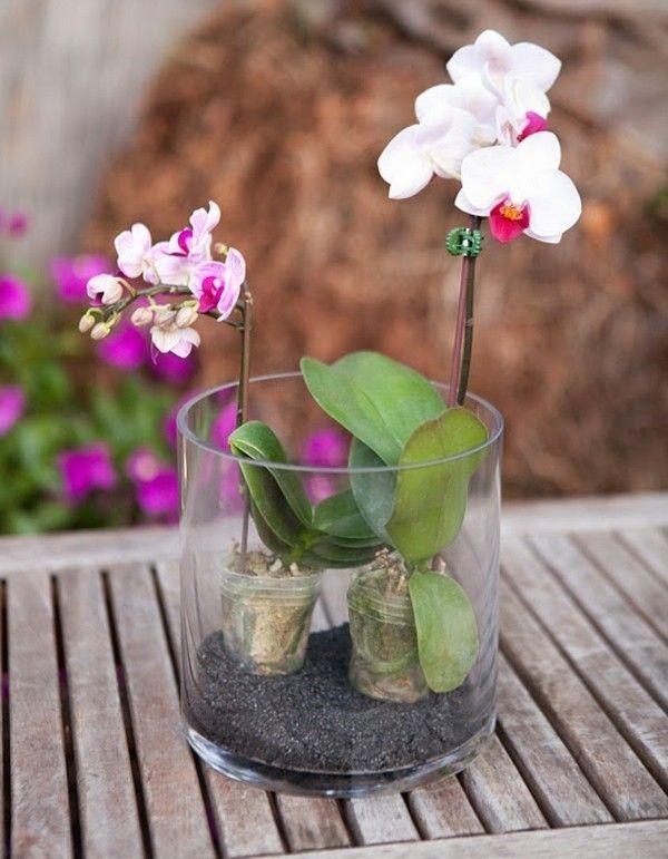 composition florale avec deux orchidées