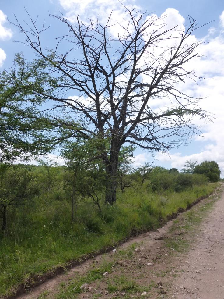 and still life. Increible! Una rama aún hace su trabajo.