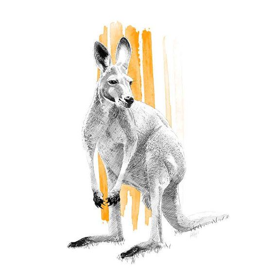 Skippy the Kangaroo illustration, Fine Art Print, Drawing, Sketch, Australia. By Incandescent Design www.incandescent.design