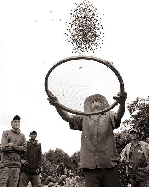 utinga farmer by Douglas Takeshi Wolfe