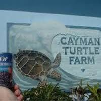Don't forget to make a visit to the famous Cayman Turtle Farm