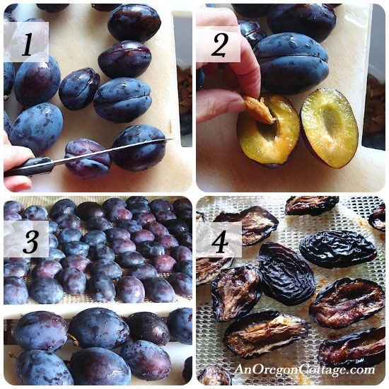 Of all the fruits I preserve in some way - freezing, canning, or drying - dried plums are probably my family's favorite. They are simply a wonderful chewy-tart snack that we eat almost as fast as I can dry them.    And they are NOT prunes - they