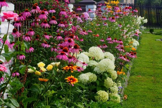 Rabata Przy Ogrodzeniu Plants Sedum Flower Beds