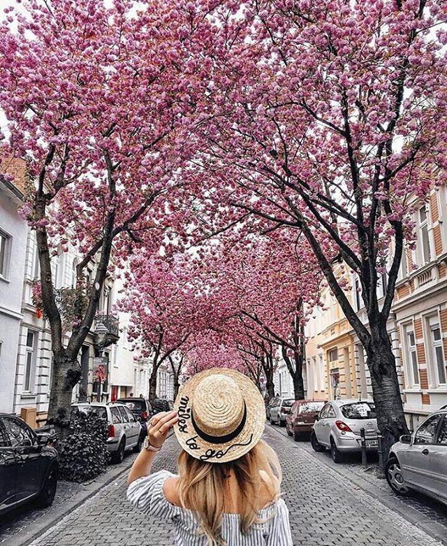 Cherry Blossom Hookup Asian überall auf der Welt