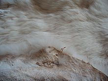 Tanned rabbit pelt; rabbit pelt is prized for its softness. Rabbit pelts are sometimes used for clothing and accessories, such as scarves or hats. Angora rabbits are bred for their long, fine hair, which can be sheared and harvested like sheep wool. Rabbits are very good producers of manure; additionally, their urine, being high in nitrogen, makes lemon trees very productive. Their milk may also be of great medicinal or nutritional benefit due to its high protein content
