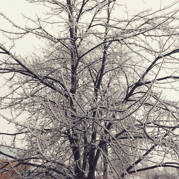 #frozen #winterwonderland #nature #ottawa