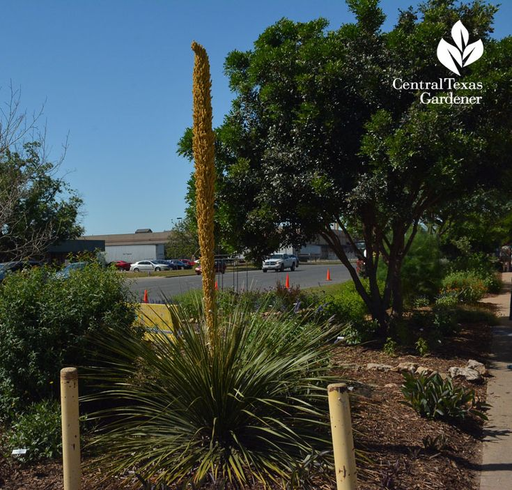 Landscaping Project North Texas: Top 78 Ideas About GG Landscape Project Ideas On Pinterest