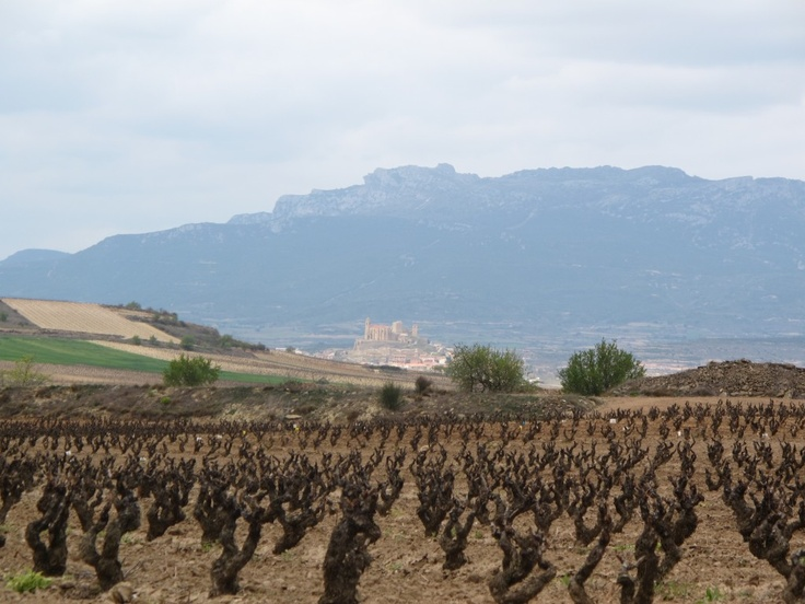 Pruned grapes waiting for summer in Haro, Spain