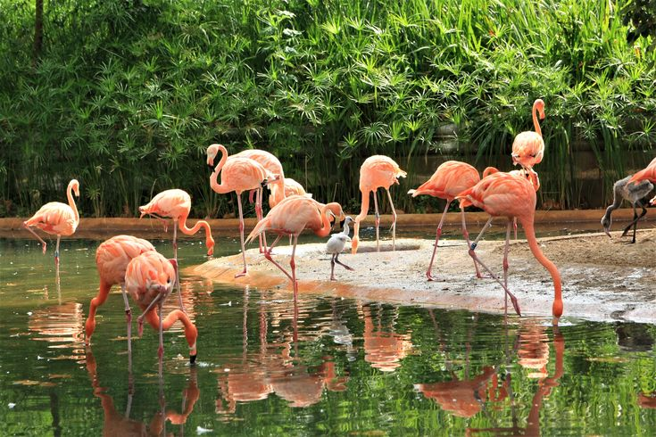 What to visit in Barcelona? The ZOo!