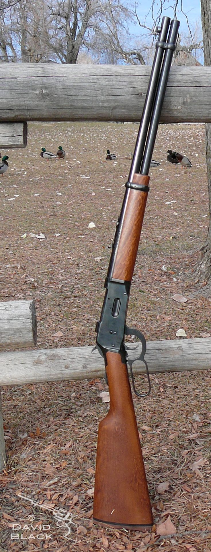Mossberg 464 Lever action rifle. Patterned after the Winchester 1894 lever action rifle. Great cowboy gun.